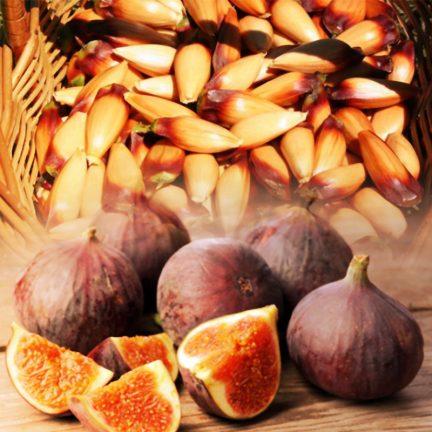 Pinhões e Figos para Dom Paulo