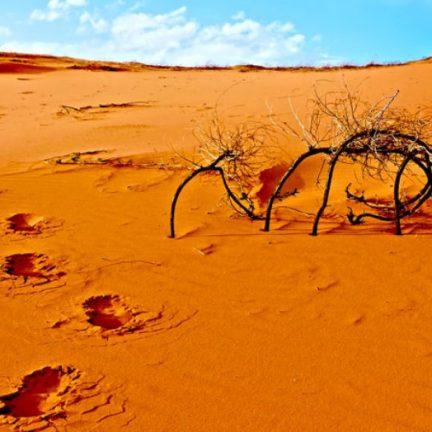 Entrar no deserto e descobrir a graça da vida batismal