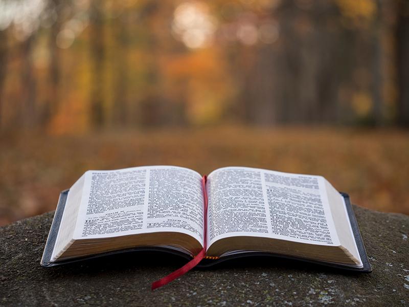 Artigo: Em atenção à Tua Palavra