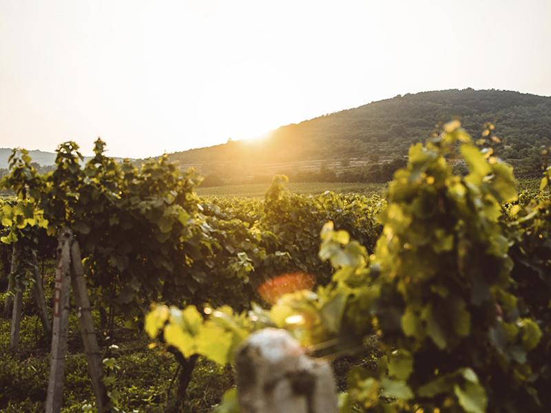 Artigo: Trabalhar na vinha do Senhor e produzir bons frutos