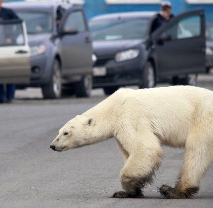"""Relatório da ONU sobre o clima: é """"alerta vermelho"""""""